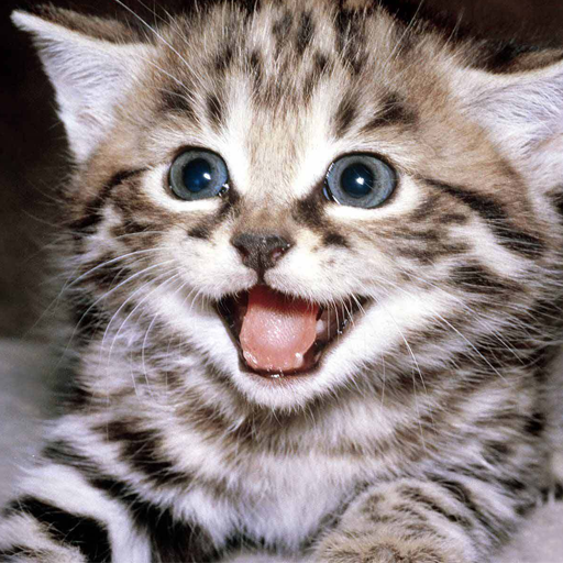 A happy kitten